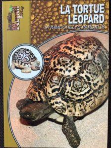 La tortue léopard Stigmochelys pardalis