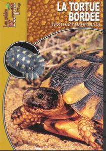 La tortue bordée-Testudo Marginata